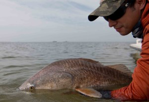 fly fish redfish louisiana