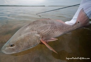 redfish-south-padre-texas
