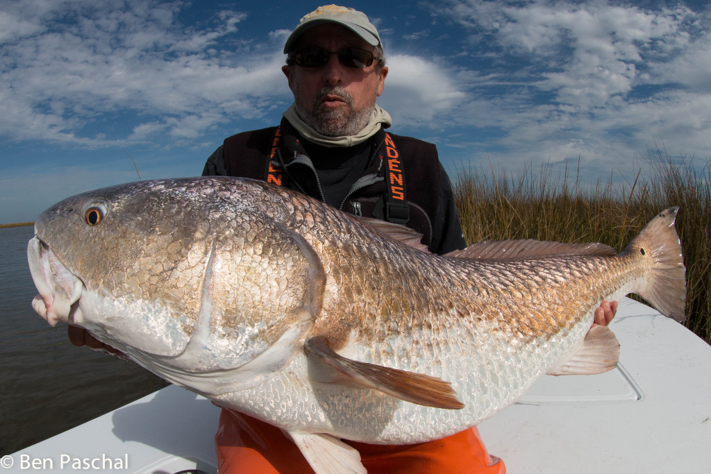 louisiana redfish on fly