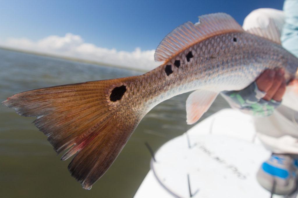 jt-sept-peyton-fish