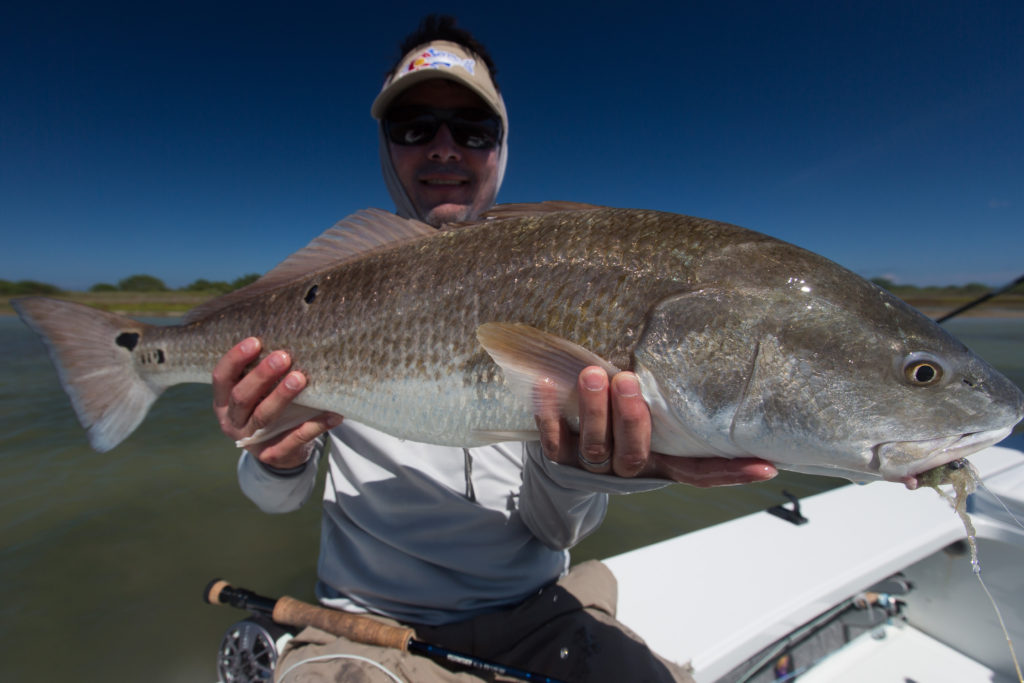 texas bull redfish