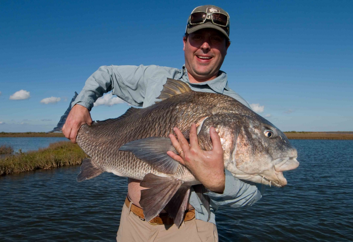 Fly fishing for bull redfish in louisianalaguna madre for Saltwater drum fish