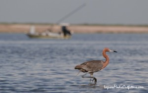 egret and skiff