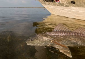 redfish-skiff